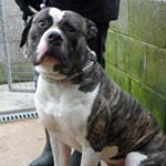 This adorable chap is Jack and he has been in NEDDC's kennels for a long time after being picked up by the dog wardens.